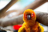yellow and red parrot close up sits under tree branch in cage.