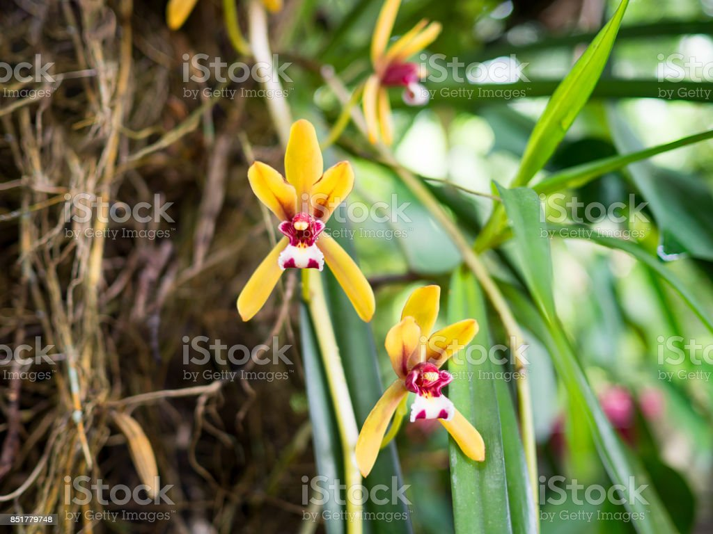 Yellow And Red Small Orchids In Nature Stock Photo More Pictures
