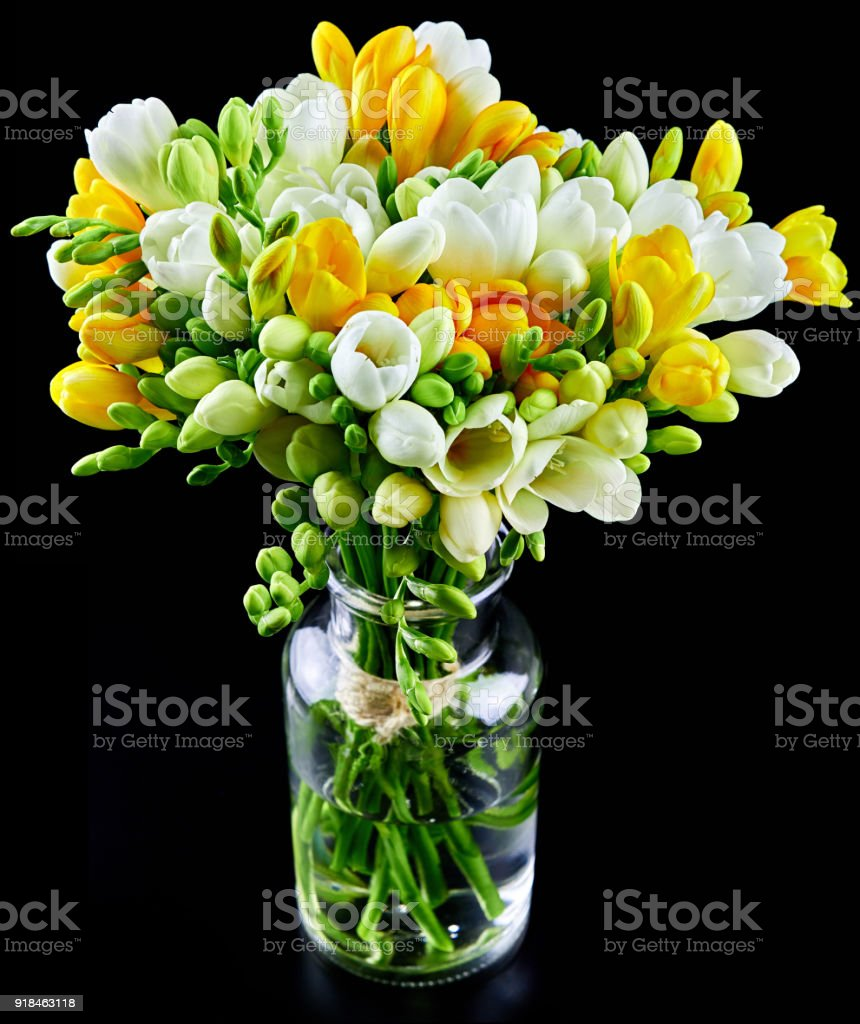 Yellow And White Freesia Flowers In A Glass Vase Isolated On Black