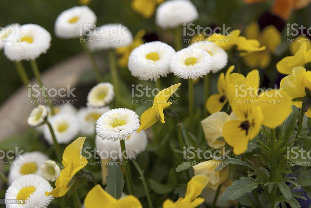 yellow and white stock photo