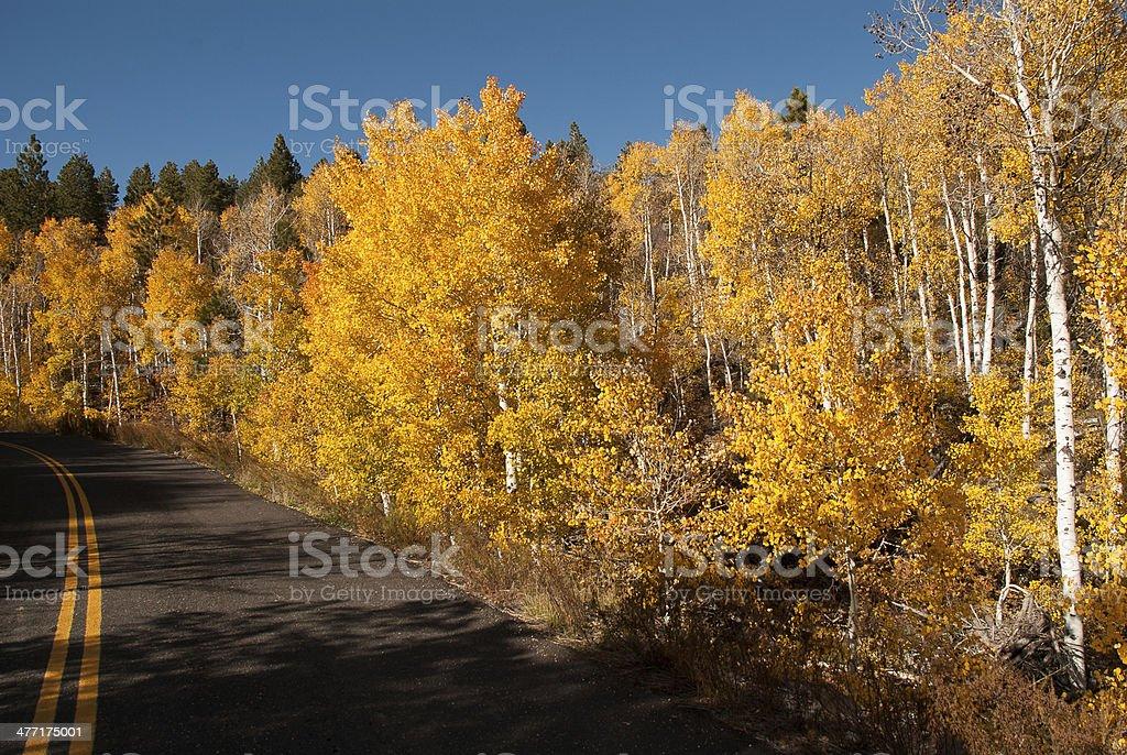 Yellow Aspen Kolob Terrace Road Zion National Park Utah royalty-free stock photo