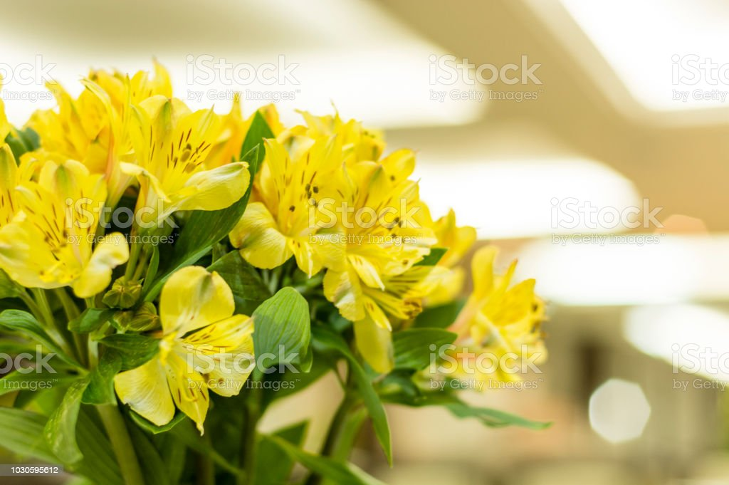Yellow astromelia flower in a floral bouquet – zdjęcie
