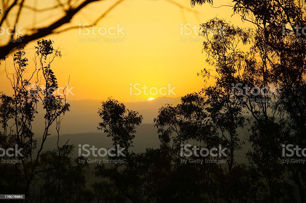 A yellow Australian sunset behind the trees stock photo