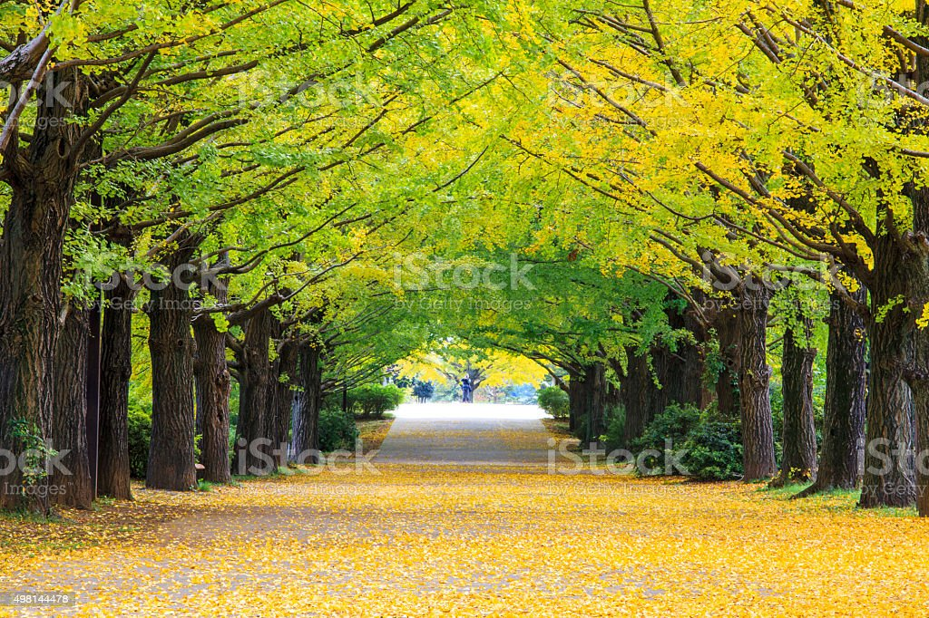 Yellow autumn color stock photo