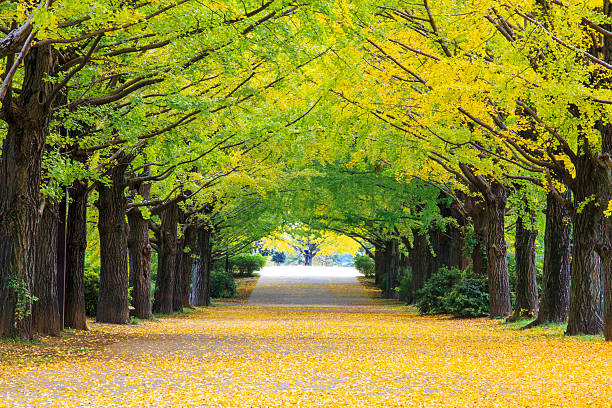 yellow autumn color - north stock photos and pictures