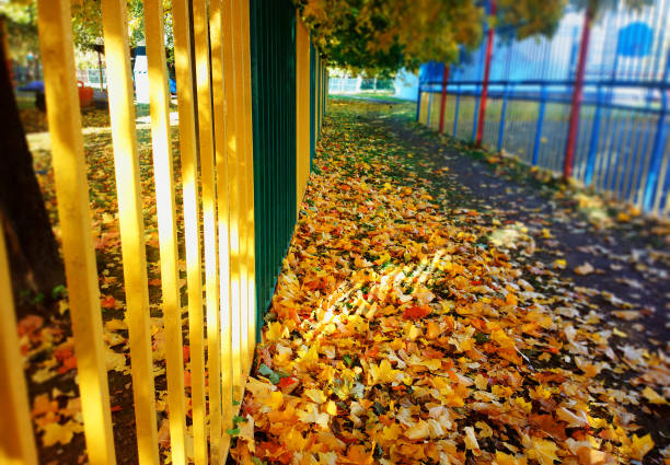 Yellow autumn fence with light leak background stock photo