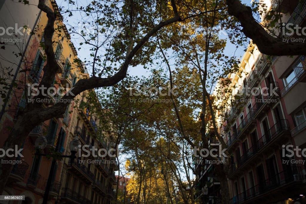 Foto De Amarela Folhagem De Outono E Casas Na Rambla Del Poblenou Em Barcelona Espanha E Mais Fotos De Stock De Amarelo Istock