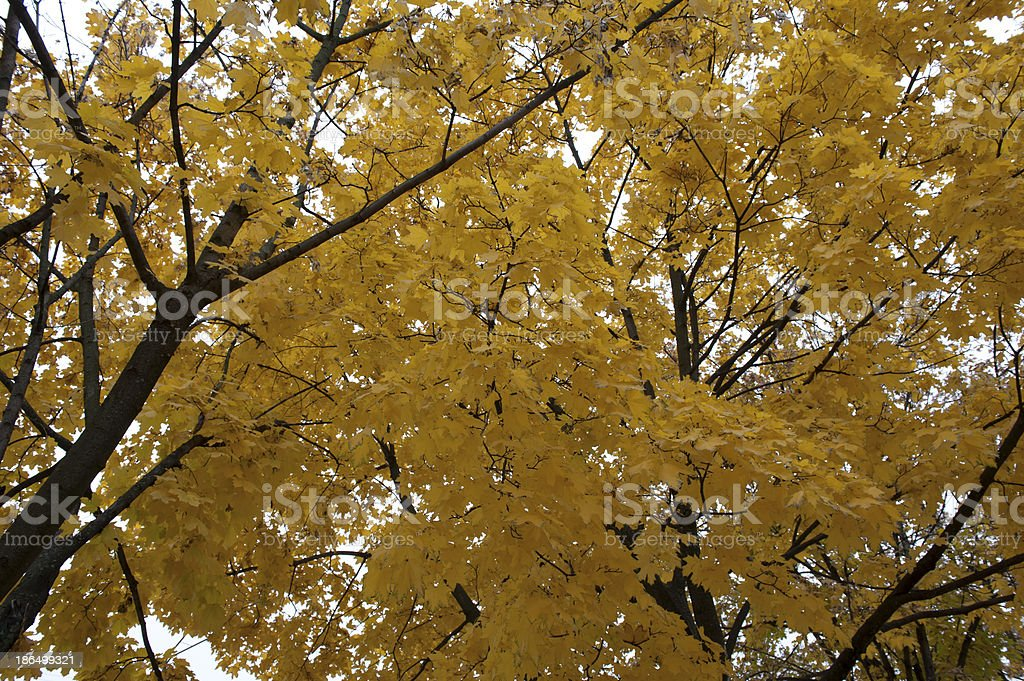 Yellow autumn has arrived royalty-free stock photo