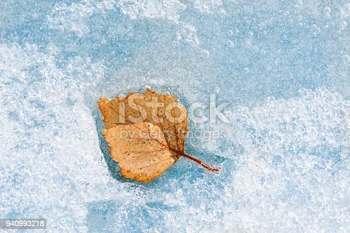 Yellow autumn leaf on the blue ice. Macro image, shallow depth of field