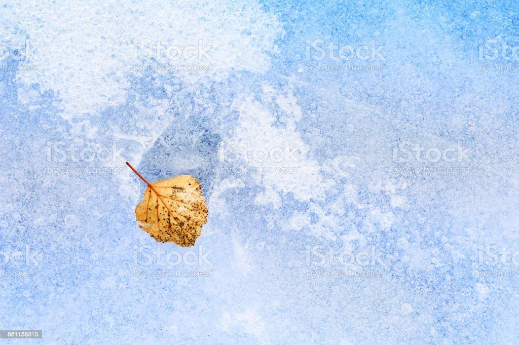 Yellow autumn leaf on the ice of frozen lake royalty-free stock photo