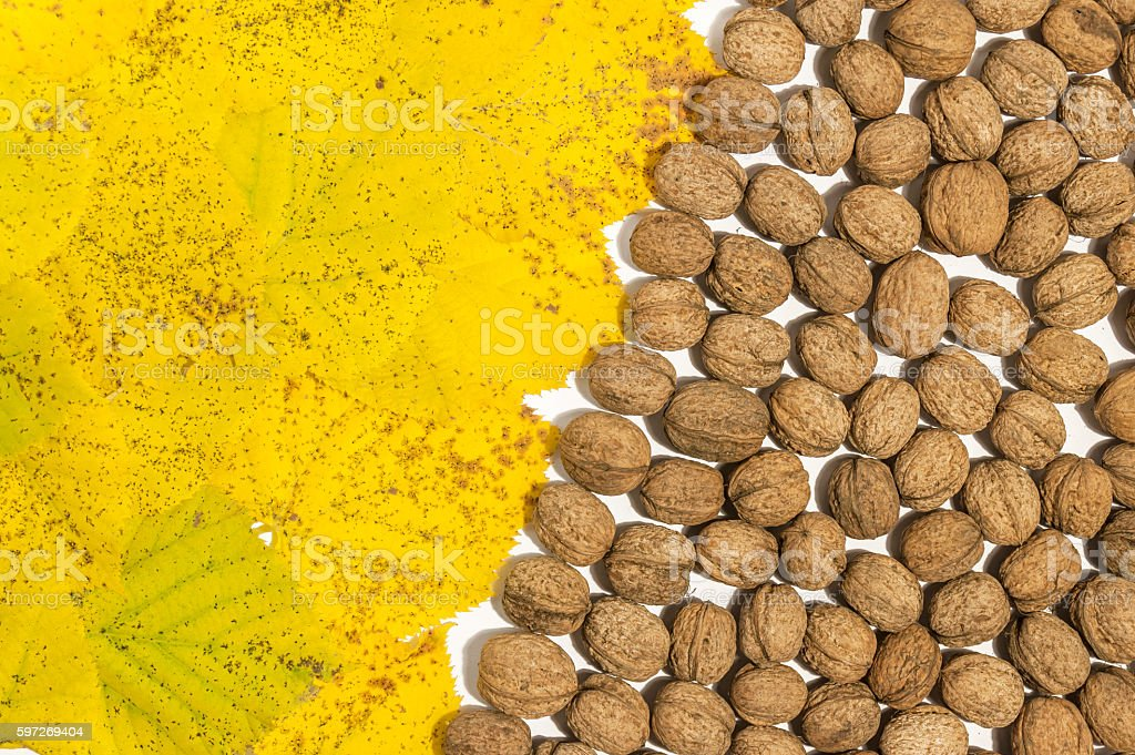 Yellow autumn leaves and lot walnuts on white table photo libre de droits
