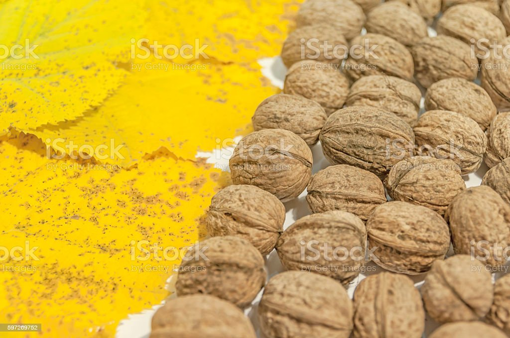 Yellow autumn leaves and lot walnuts on white table royalty-free stock photo