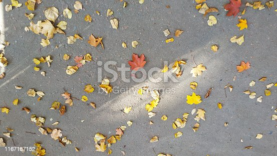 istock Yellow autumn leaves background. Outdoor. 1167187152