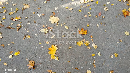 istock Yellow autumn leaves background. Outdoor. 1167187159