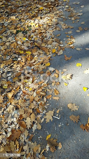 istock Yellow autumn leaves background. Outdoor. 1167187196