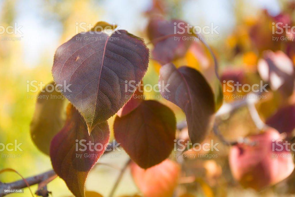 Feuilles d'automne fond jaune. - Photo de Abstrait libre de droits