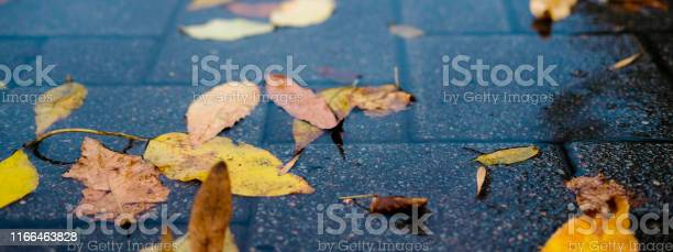 Yellow autumn leaves in a puddle on a gloomy rainy day beautiful of picture id1166463828?b=1&k=6&m=1166463828&s=612x612&h= jh7qtzhgjvbctgfkhcqvwtsmppqnk6amt3cvuj6nmm=