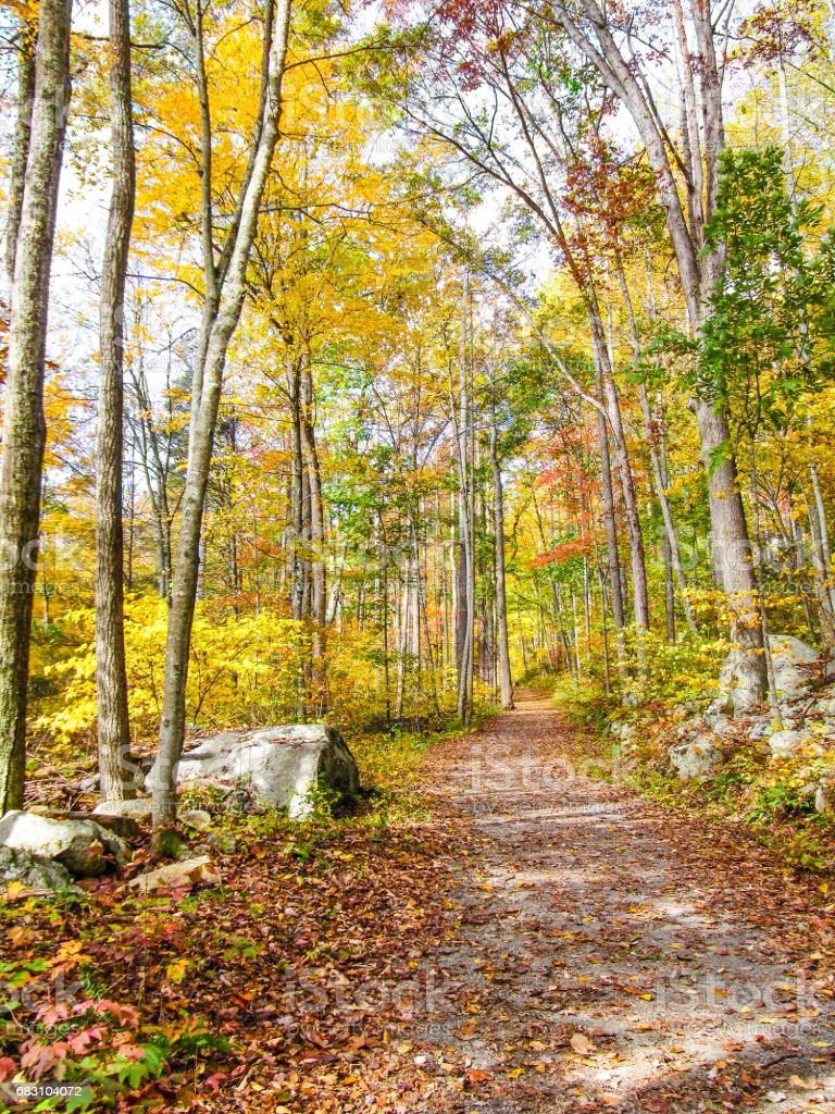 Yellow autumn leaves in golden forest with path stock photo