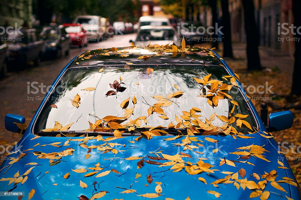 Yellow autumn leaves on a blue car stock photo