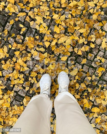 taken on mobile device yellow autumn leaves underfoot
