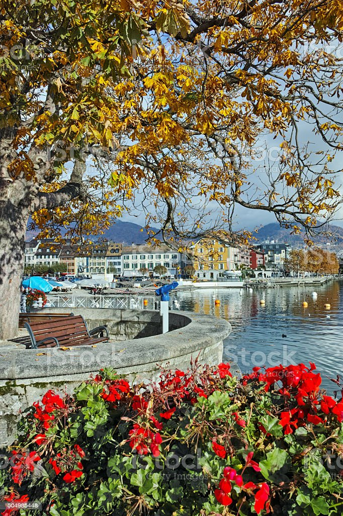 Yellow autumn tree in embankment of town of Vevey stock photo