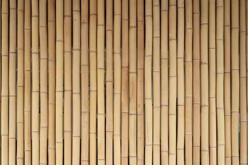 Yellow bamboo wooden fence. Background from bamboo, wood texture. Project work