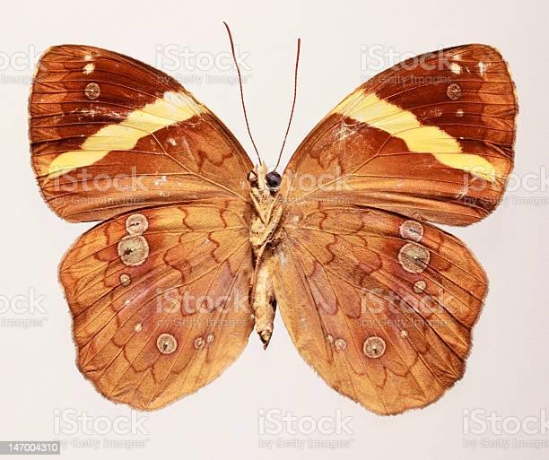 Yellow barred butterfly picture id147004310?b=1&k=6&m=147004310&s=612x612&h=axodezazxznmzhz pjb 0q hbvysoywdcerygd mazu=