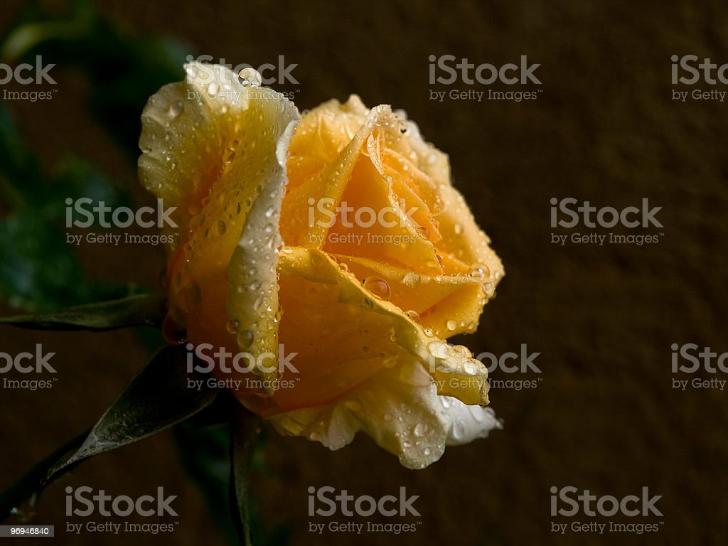 Yellow beautiful flower royalty-free stock photo