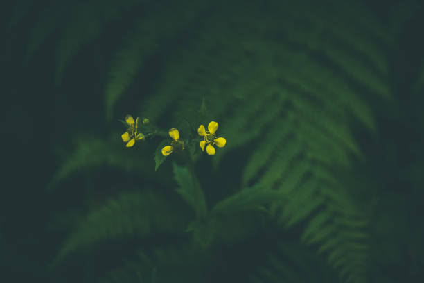 Yellow blooming flowers over rich green ferns in dark forest stock photo
