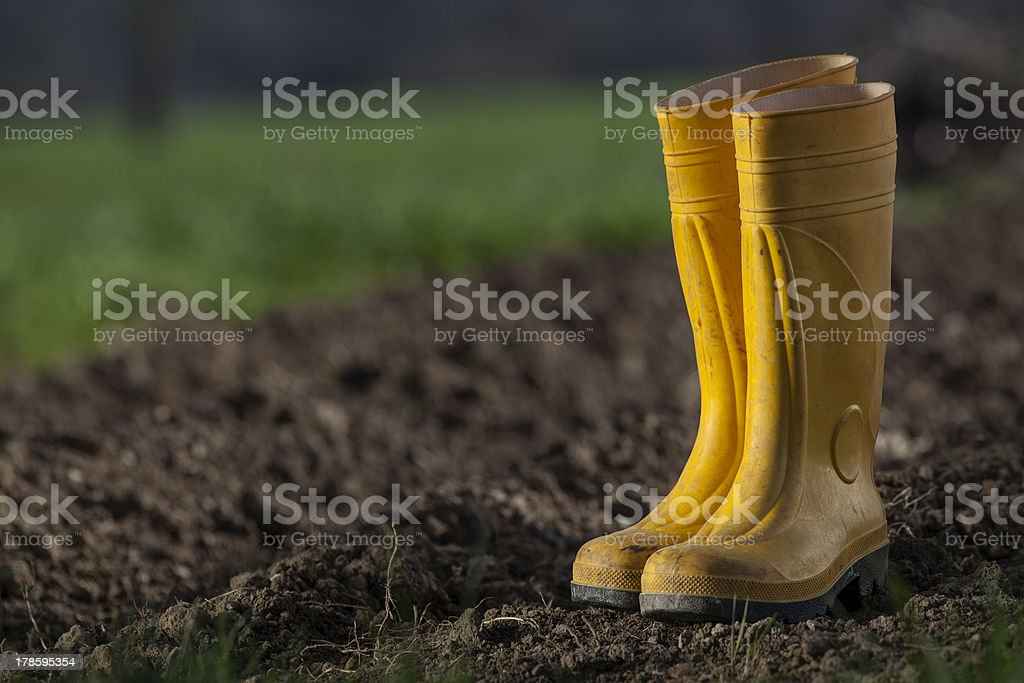 Yellow boots in a home garden royalty-free stock photo