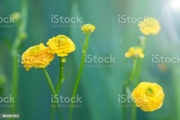 Foto de Florzinha Amarela Sobre Um Fundo Verde e mais fotos de stock de Abril