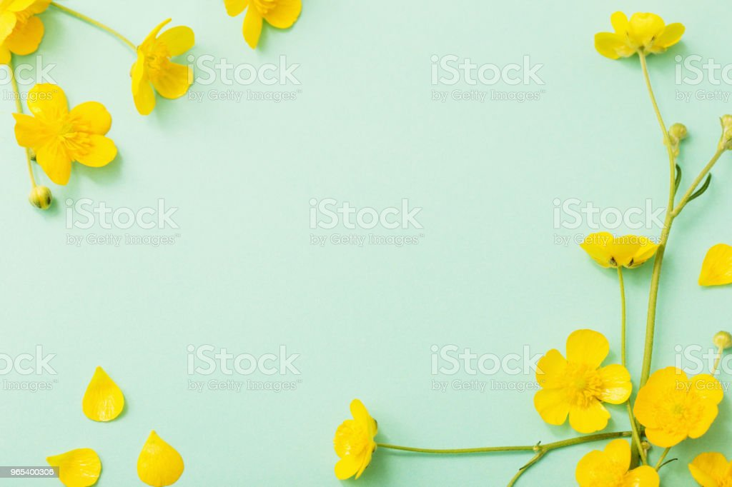 yellow buttercups on green paper background royalty-free stock photo