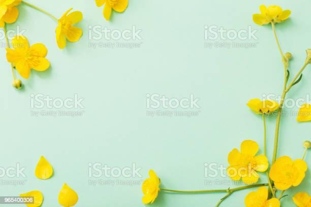 Żółte Jaskierki Na Zielonym Tle Papieru - zdjęcia stockowe i więcej obrazów Bez ludzi