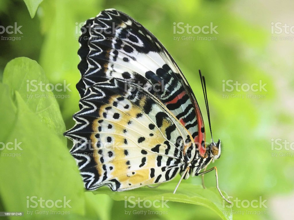 Yellow butterfly fly in morning nature royalty-free stock photo