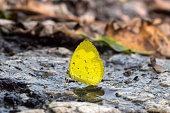 Yellow butterfly near a waterfall