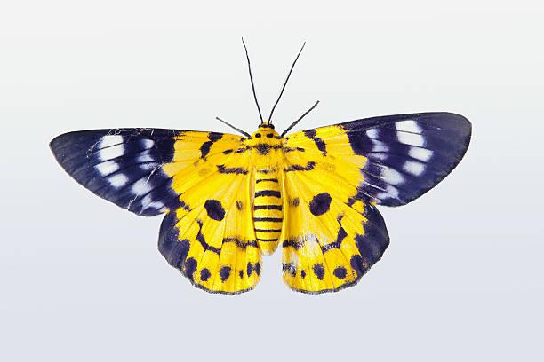 Yellow butterfly picture id176887836?b=1&k=6&m=176887836&s=612x612&w=0&h=pkjn3x0zin4jmsqgiekb3axcu3wmsjd7lrcjzdqqqr8=