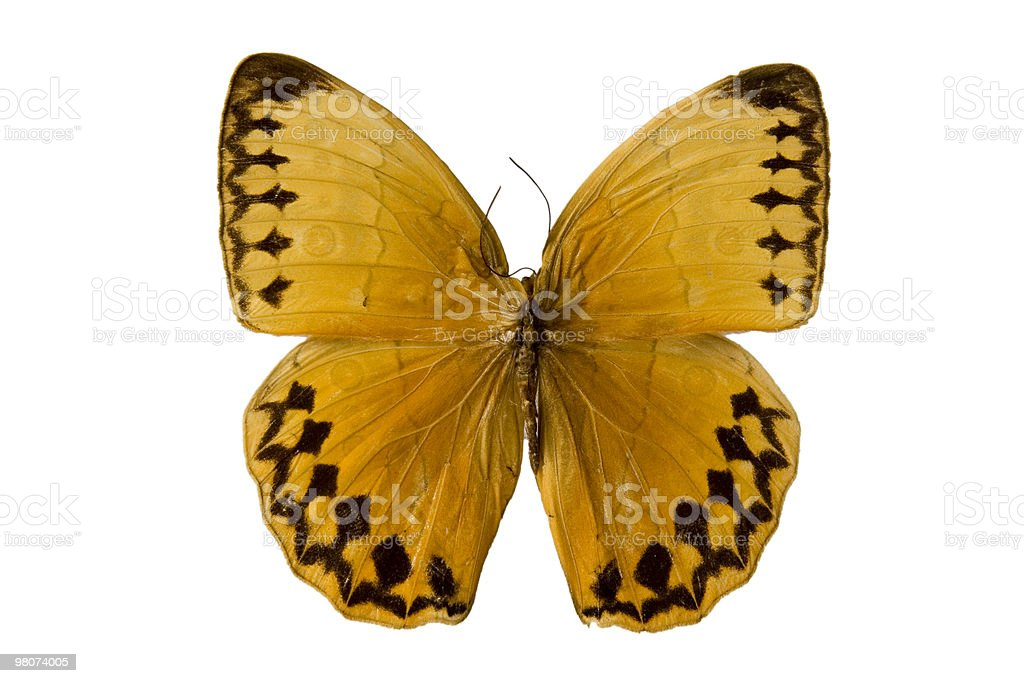 Farfalla gialla foto stock royalty-free