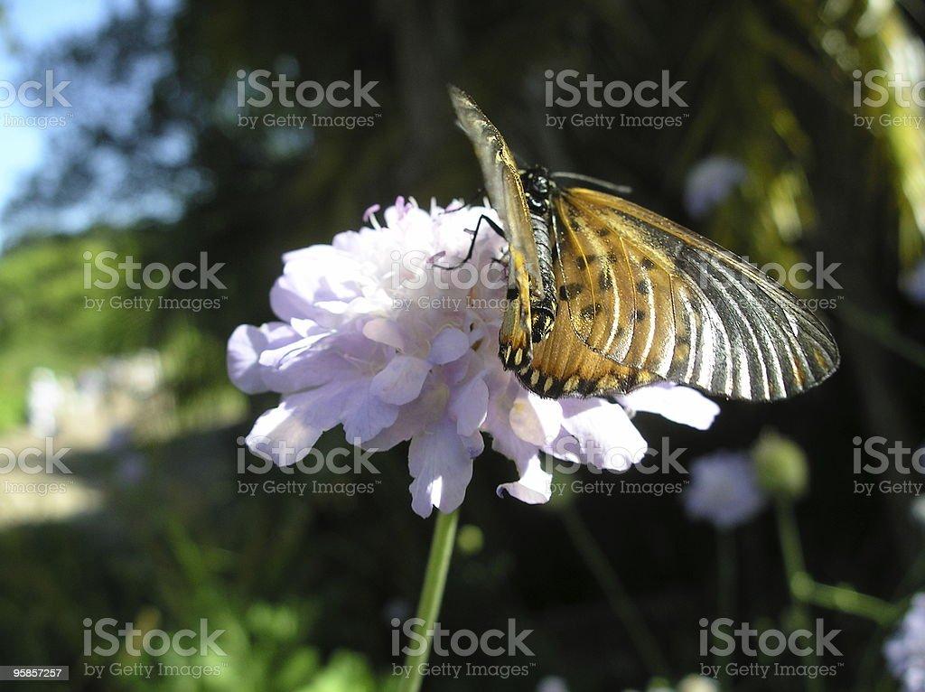 Gelbe Schmetterling Suche nach Nektar auf einer Blume – Foto