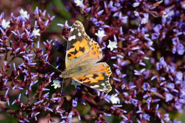 Yellow butterfly with litter flowers stock photo