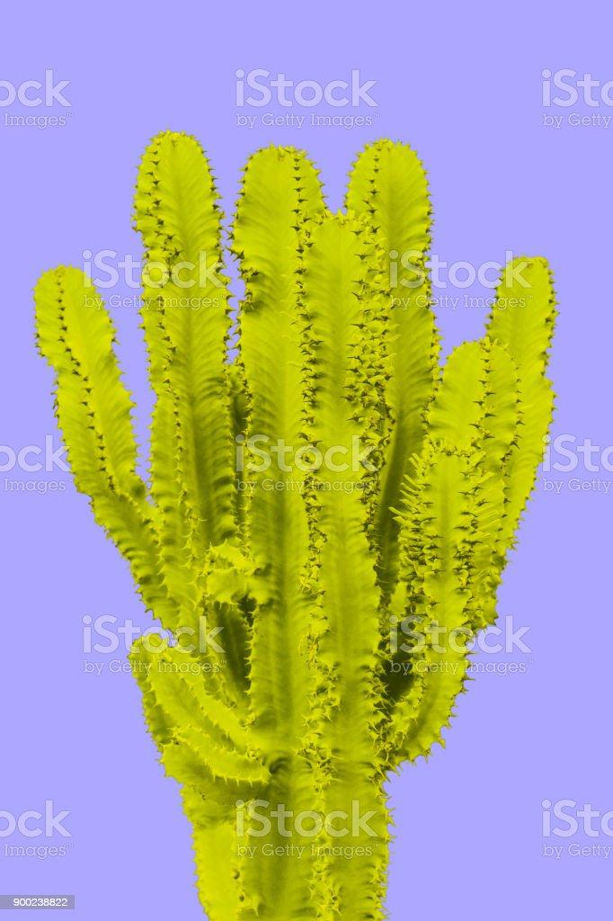 Yellow Cactus. Creative design. Minimal fashion art gallery stock photo