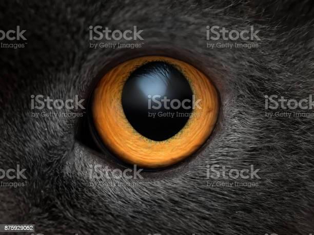 Yellow cat eye close up picture id875929052?b=1&k=6&m=875929052&s=612x612&h=lgan12voyy7sstey2oumgf bv5gfp esrsqpq wlfx4=