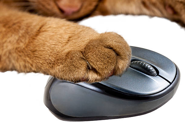 Yellow cat holding a computer mouse