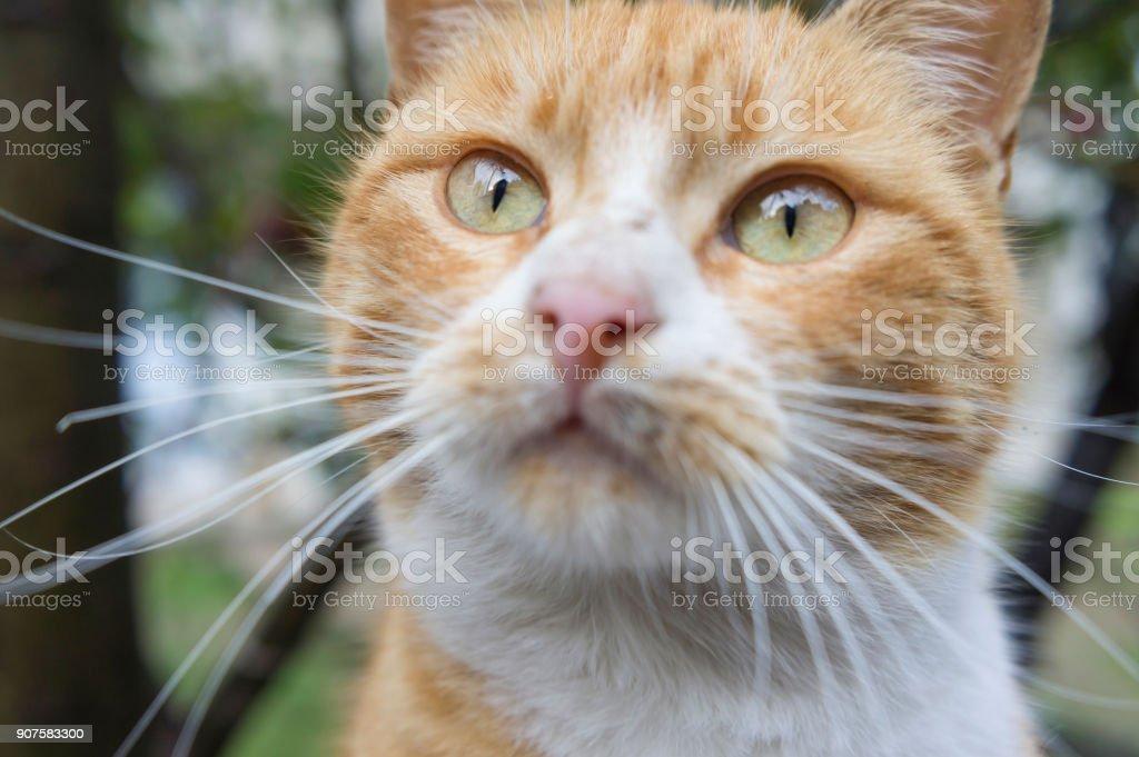 yellow cat looking stock photo