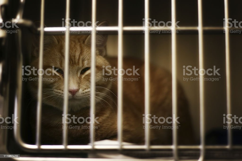 Yellow Cat stock photo
