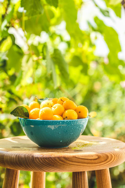 Yellow cherry plums with water drops in blue bowl stock photo