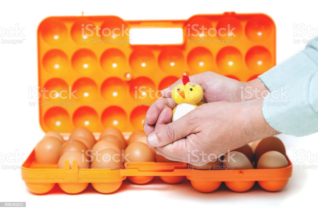 Yellow chick sitting on his hands over container with eggs stock photo