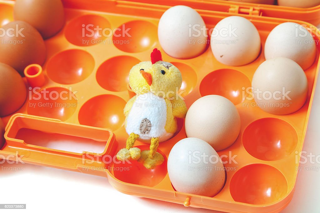 Yellow chicken and chicken eggs in plastic tray zbiór zdjęć royalty-free