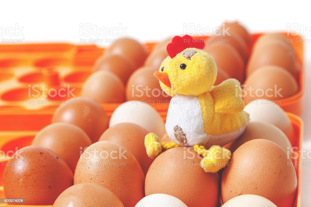 Yellow chicken sitting on top of eggs in orange tray foto de stock royalty-free