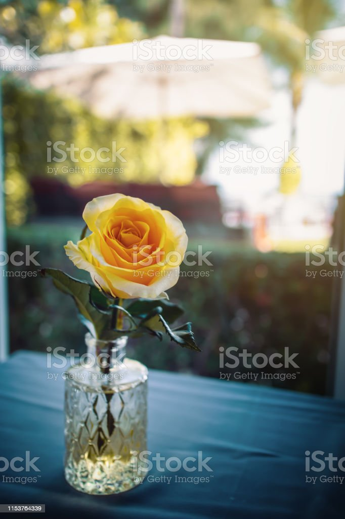 Yellow color petals rose in a vase with clear water on a garden table...