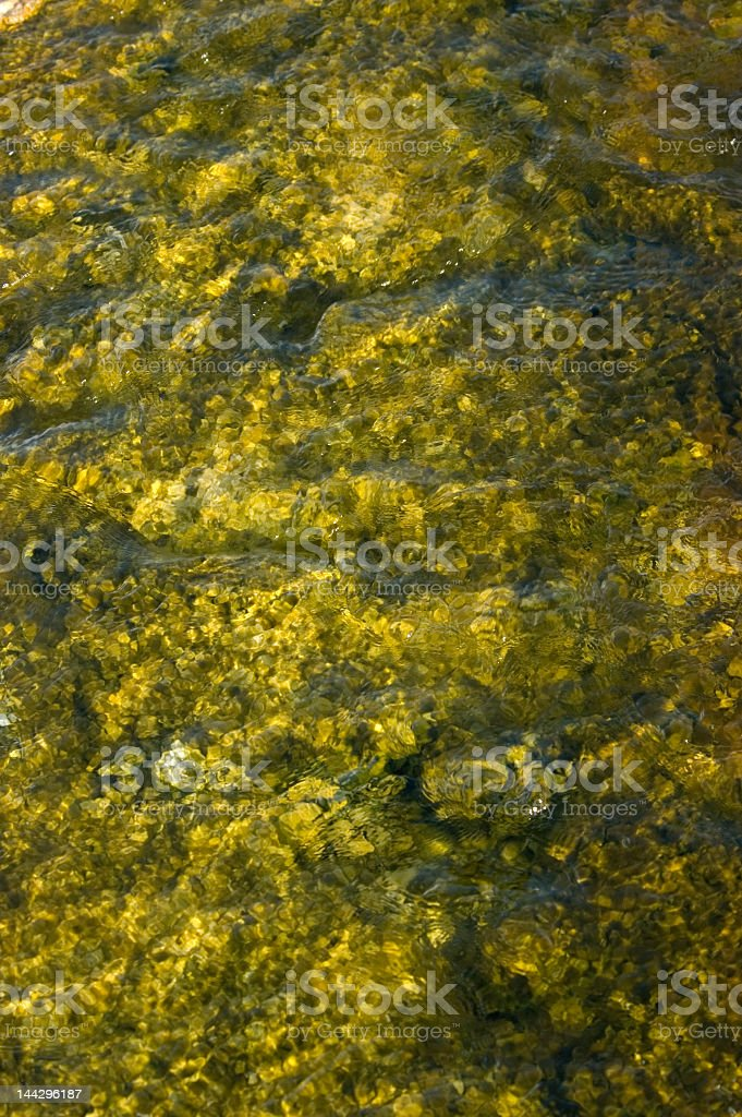 Yellow Colored Algae royalty-free stock photo